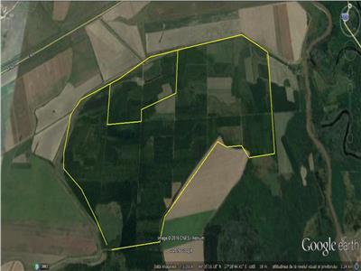 Padure de vanzare Ialomita- Slobozia - 257 ha